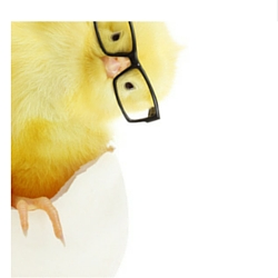cartoon-chick-with-glasses-bending-250