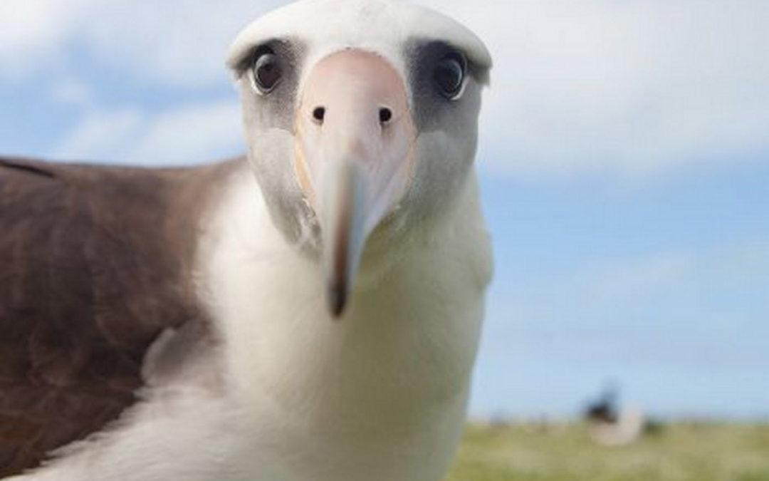 The Albatross of Healthcare